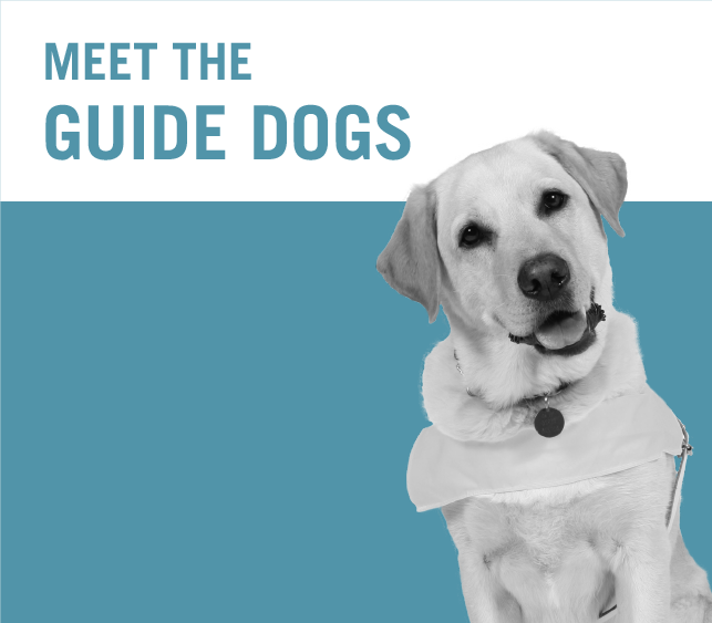 Meet the guide dogs
